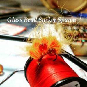 Glass Bead Sucker Spawn